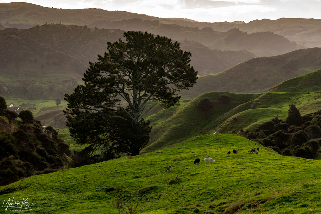 Hills and Wild Goats by yorkshirekiwi