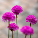 Thrift... by vignouse