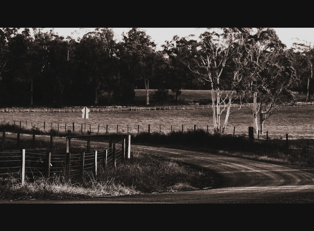 the road home by wenbow