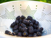 31st May 2019 - Blackberries for supper