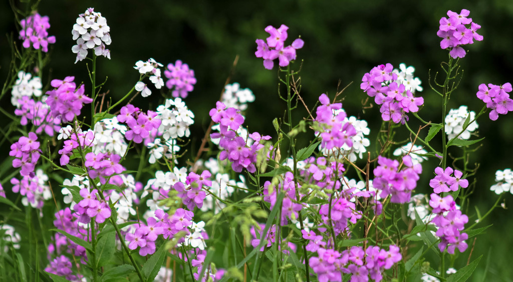 Lovely wildflowers by mittens