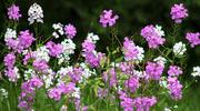 1st Jun 2019 - Lovely wildflowers