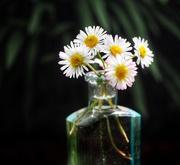 1st Jun 2019 - Where flowers bloom, so does hope .... 🌼