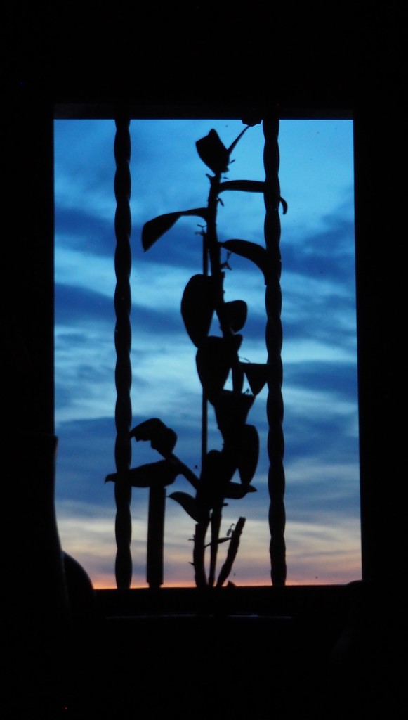 Evening: plant silhouette in the shower room window by s4sayer