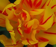 28th May 2019 - Yellow and Red