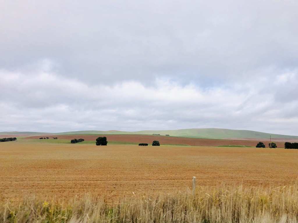 SA farmland  by pusspup