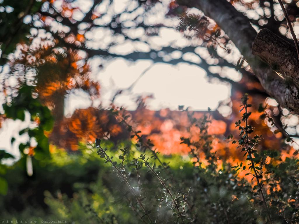 conflagration by pistache