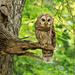 Mama Owl II by lynne5477