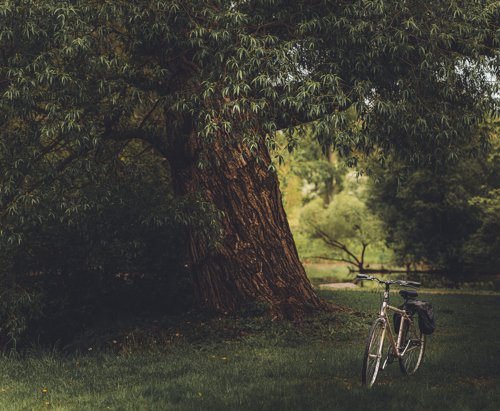 Spring bike ride by adi314