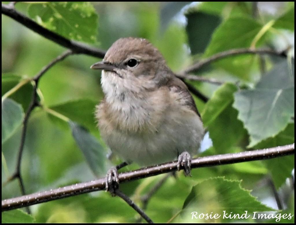 What a lovely little bird by rosiekind