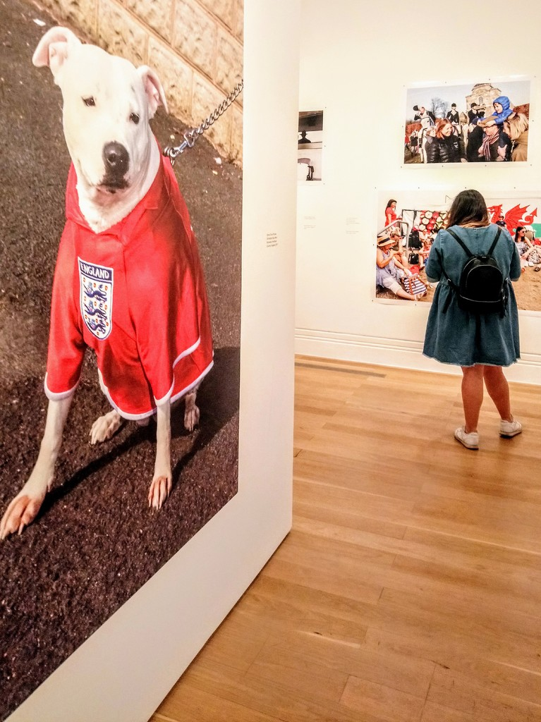 British dog by Martin Parr by boxplayer