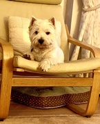3rd Jun 2019 - George on the chair
