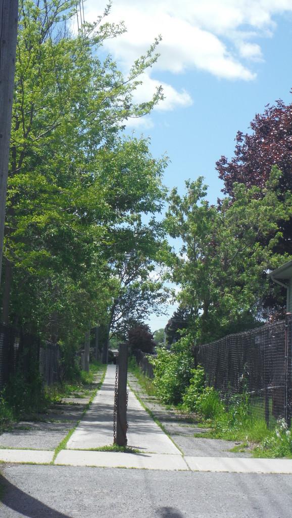 Path, Looking a Bit Wild by spanishliz