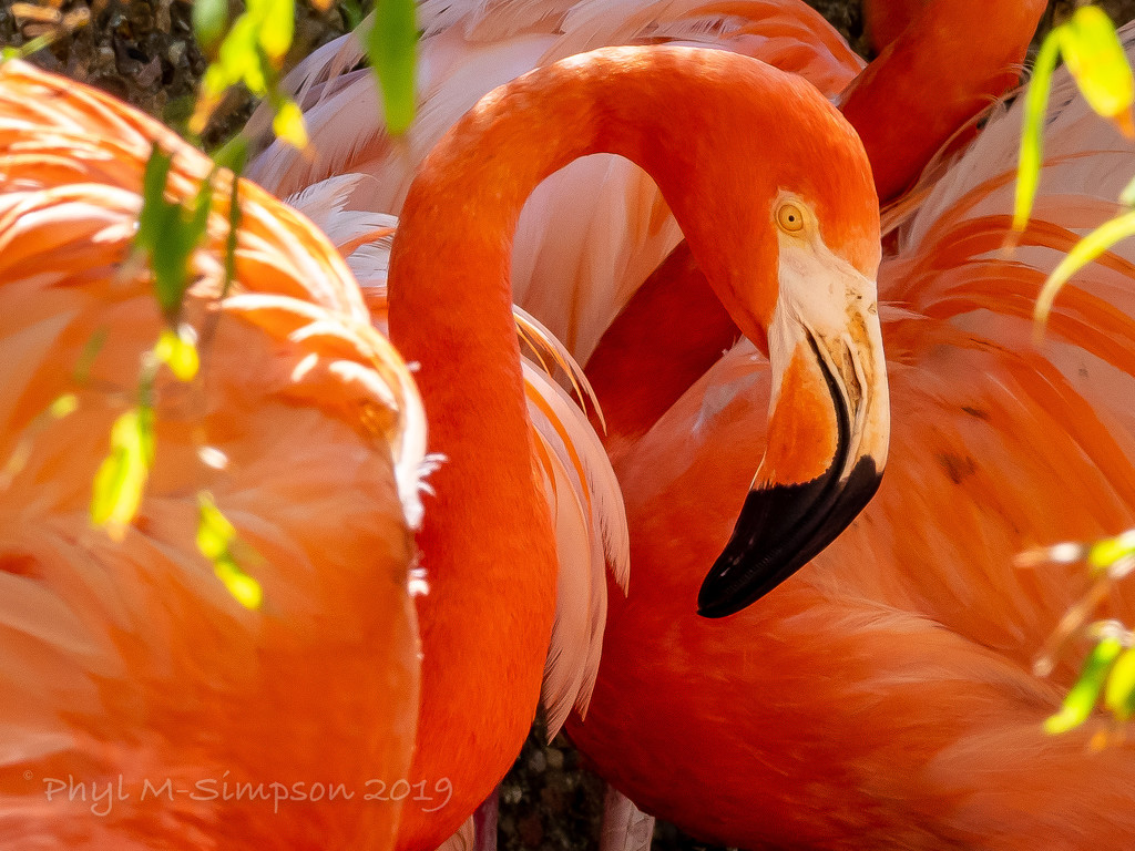 Contemplative Flamingo by elatedpixie
