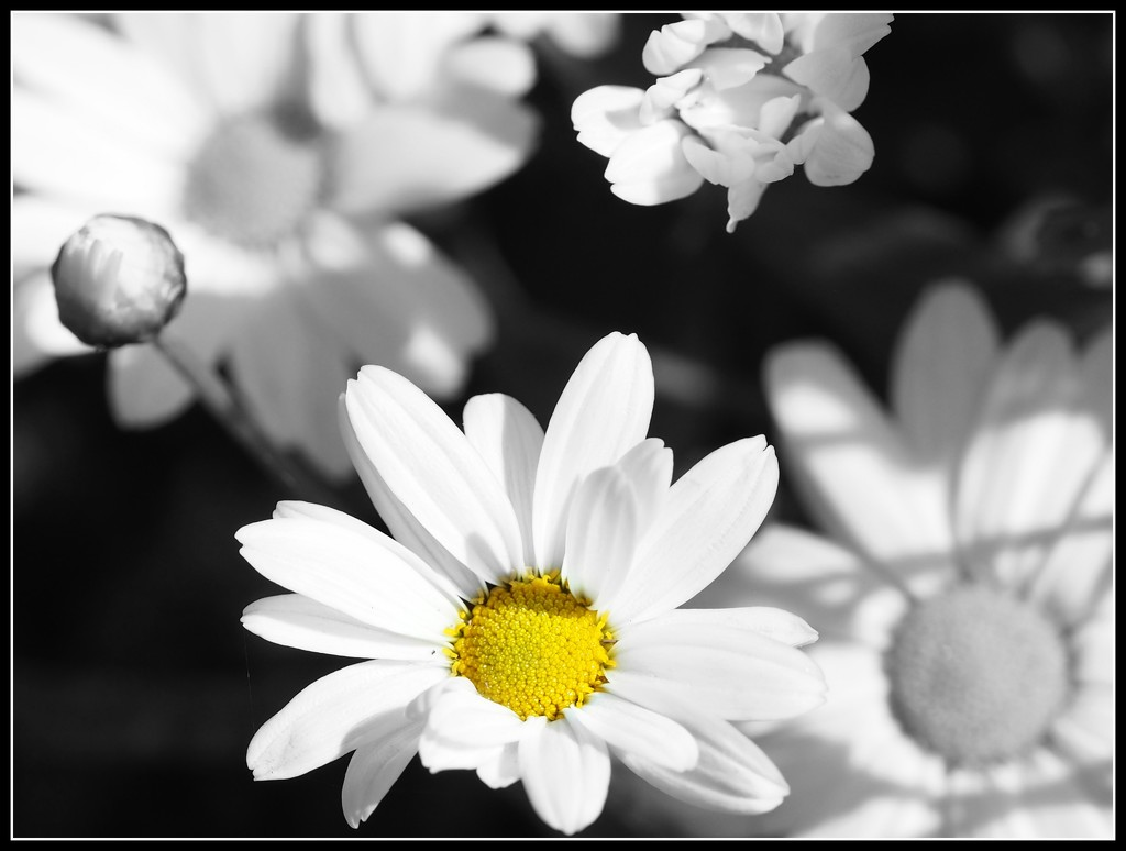 Just a little daisy in the garden by janemartin