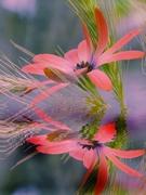 5th Jun 2019 - Grasses and daisy........