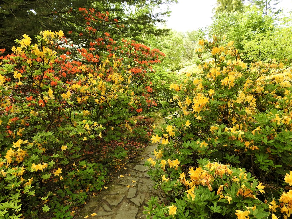Entrance to the Azalea Garden at Hergest Croft  by susiemc