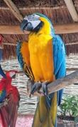 5th Jun 2019 - Macaw