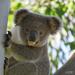 a fine Summer ...  by koalagardens