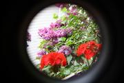 6th Jun 2019 - Lilac and Geraniums