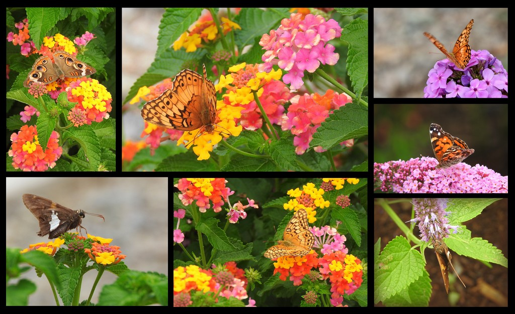 Lots and lots of butterflies by homeschoolmom