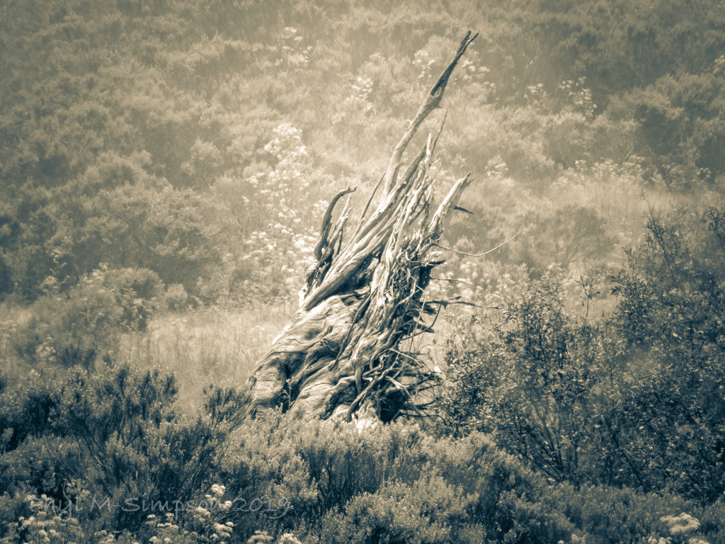 Gnarled & Long Dead ~ From The Pages of An Old Western Novel by elatedpixie