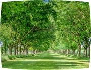 7th Jun 2019 - Sunlit Avenue Of Trees