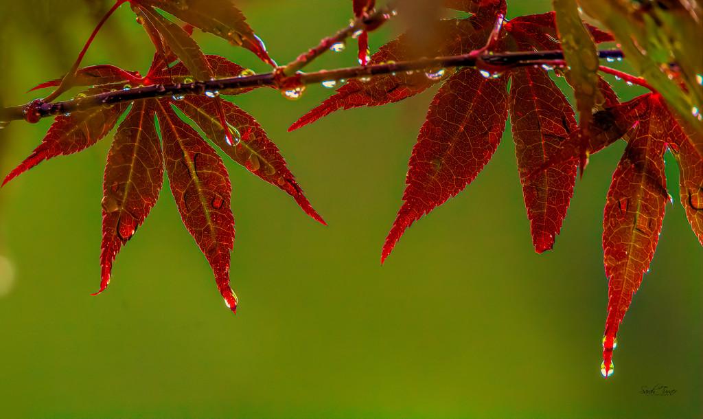 raindrops keep falling  by samae