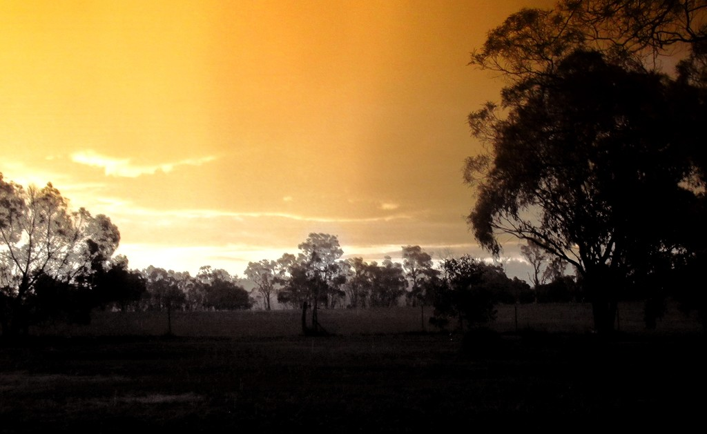 Sunset across the paddock. by robz