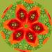 Poppy Kaleidoscope