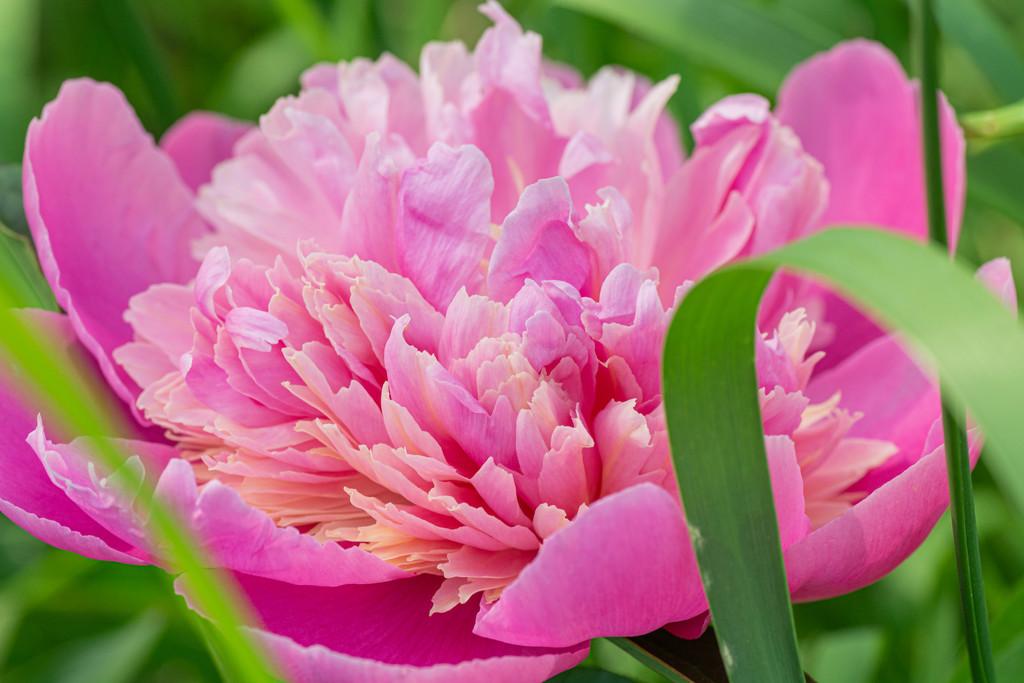 pink by jackies365