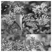 6th Jun 2019 - lilac collage