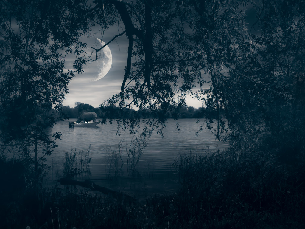 rhino in the moonlight by northy