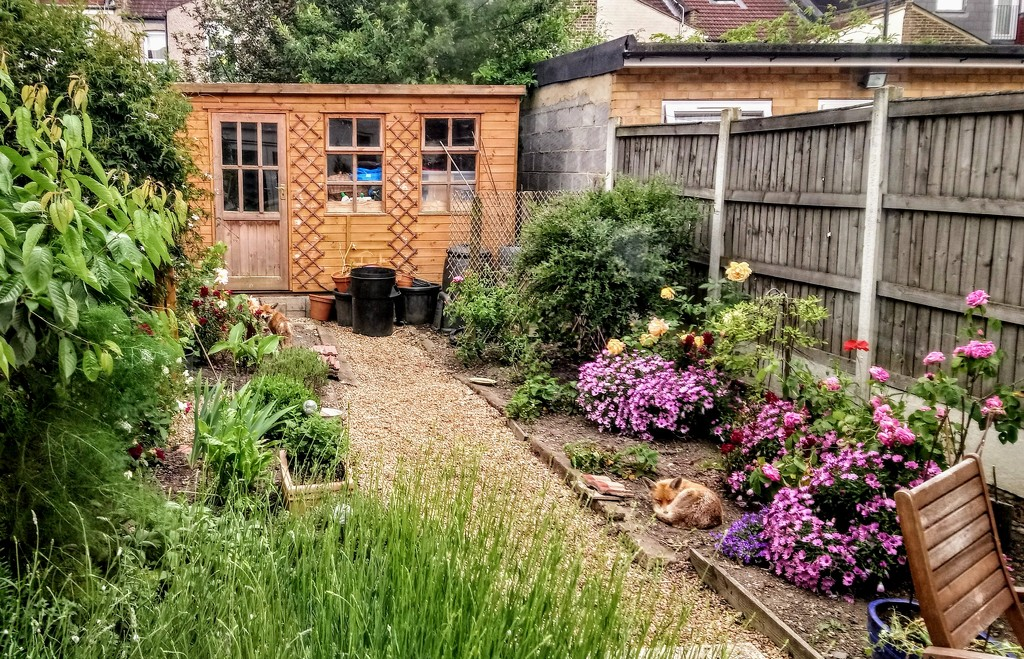 Two foxes in the garden by boxplayer