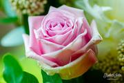 9th Jun 2019 - Pink rose