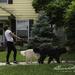 Phone Walking or Dog Walking