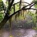 Magnolia Gardens during a rain shower