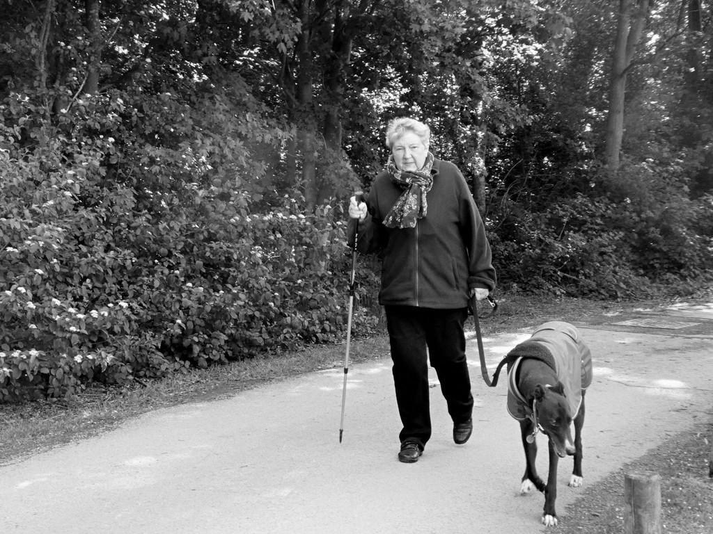 Walking Alfie by allsop