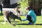 8th Jun 2019 - The kangaroo whisperer