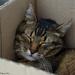 nap in a box