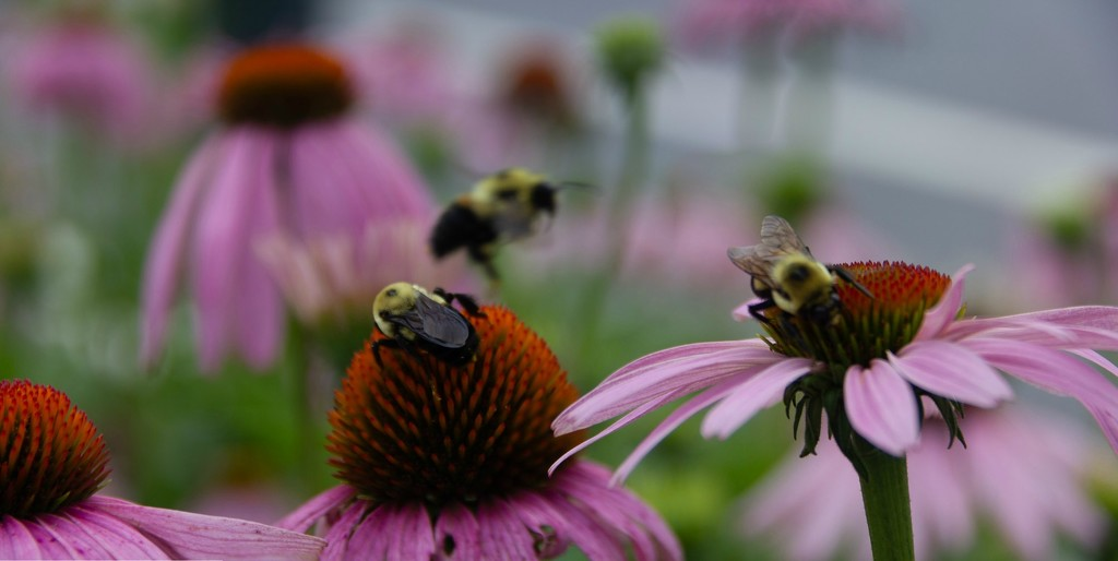Busy bees by randystreat