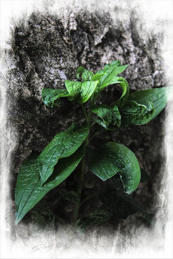 Green on Grey by digitalrn