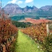 Rust en Vrede vineyards by ludwigsdiana