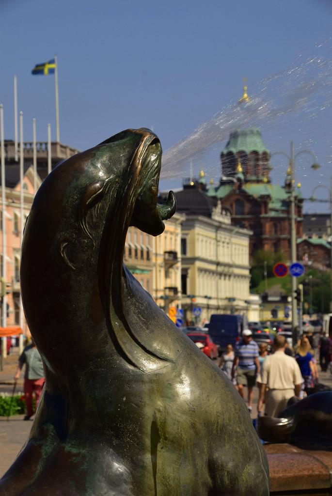 sea lion by ianmetcalfe