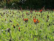 9th Jun 2019 - Mystery wildflowers