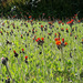Mystery wildflowers
