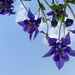 Looking up at Columbine