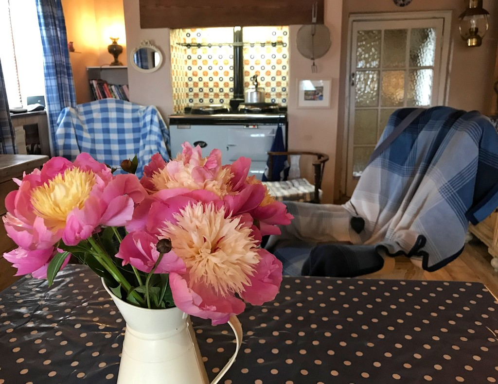First flowers from our new garden by happypat