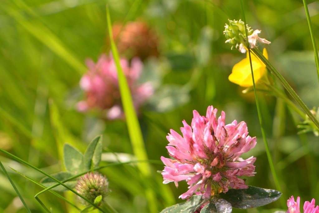 Wildflowers............. by ziggy77