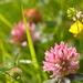 Wildflowers.............